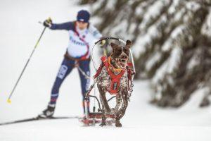 Martina Štěpánková - Skijoring