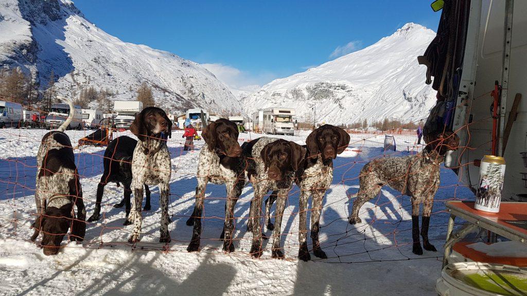 Pro mushery jsou jejich psi často součástí rodiny.