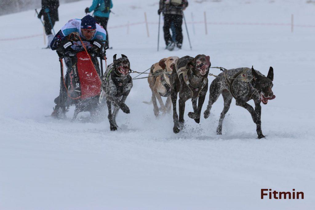 Jirka Mencák - sprint 4 dogs